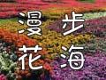 四季賞花熱門